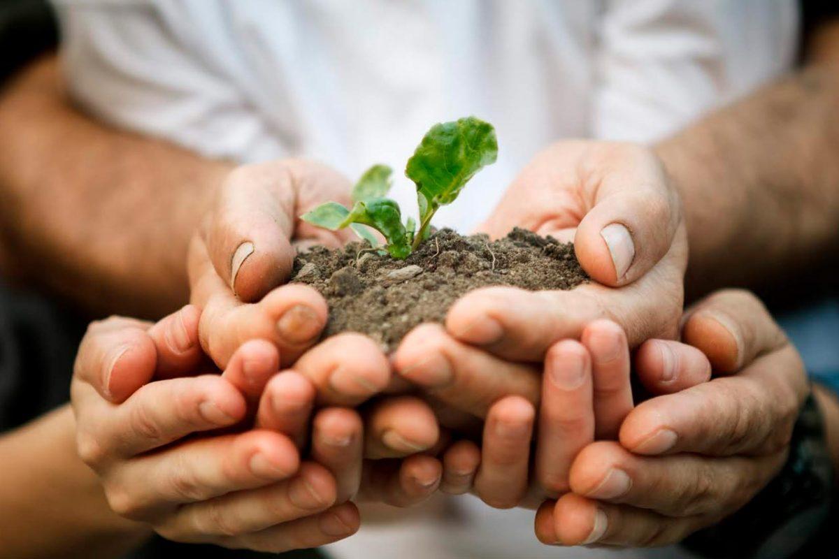 ¿Cómo ser sustentables mientras estamos en casa? Tips para reducir nuestra huella ecológica durante la cuarentena
